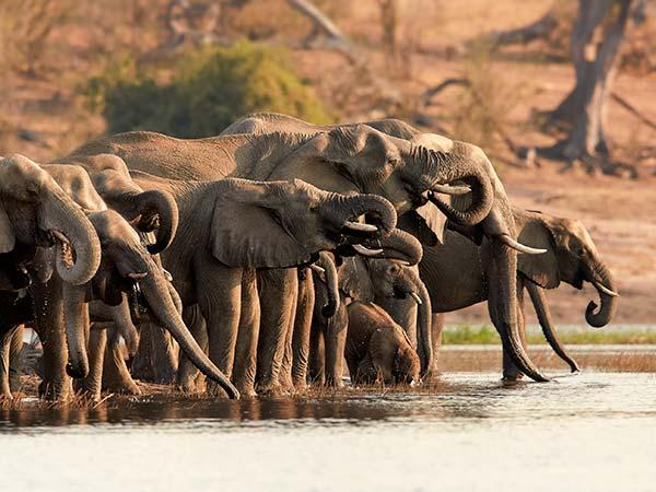 Rejser til Botswana