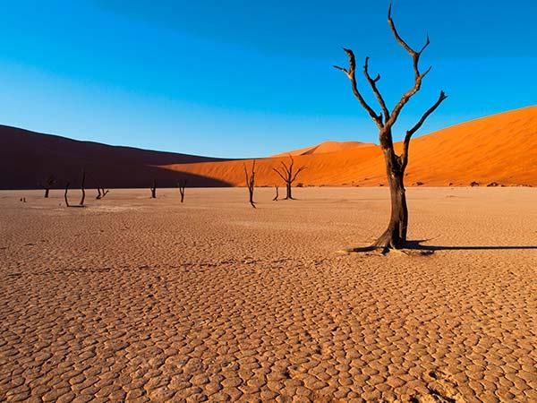 Rejser til Namibia